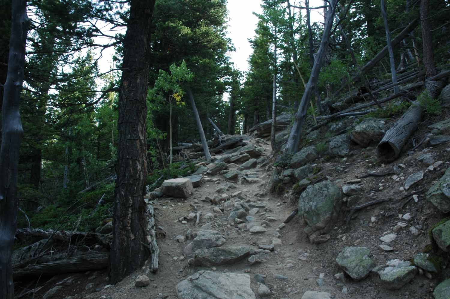 The Deer Mountain trail is listed as moderate?  The climb is over 1,200 feet