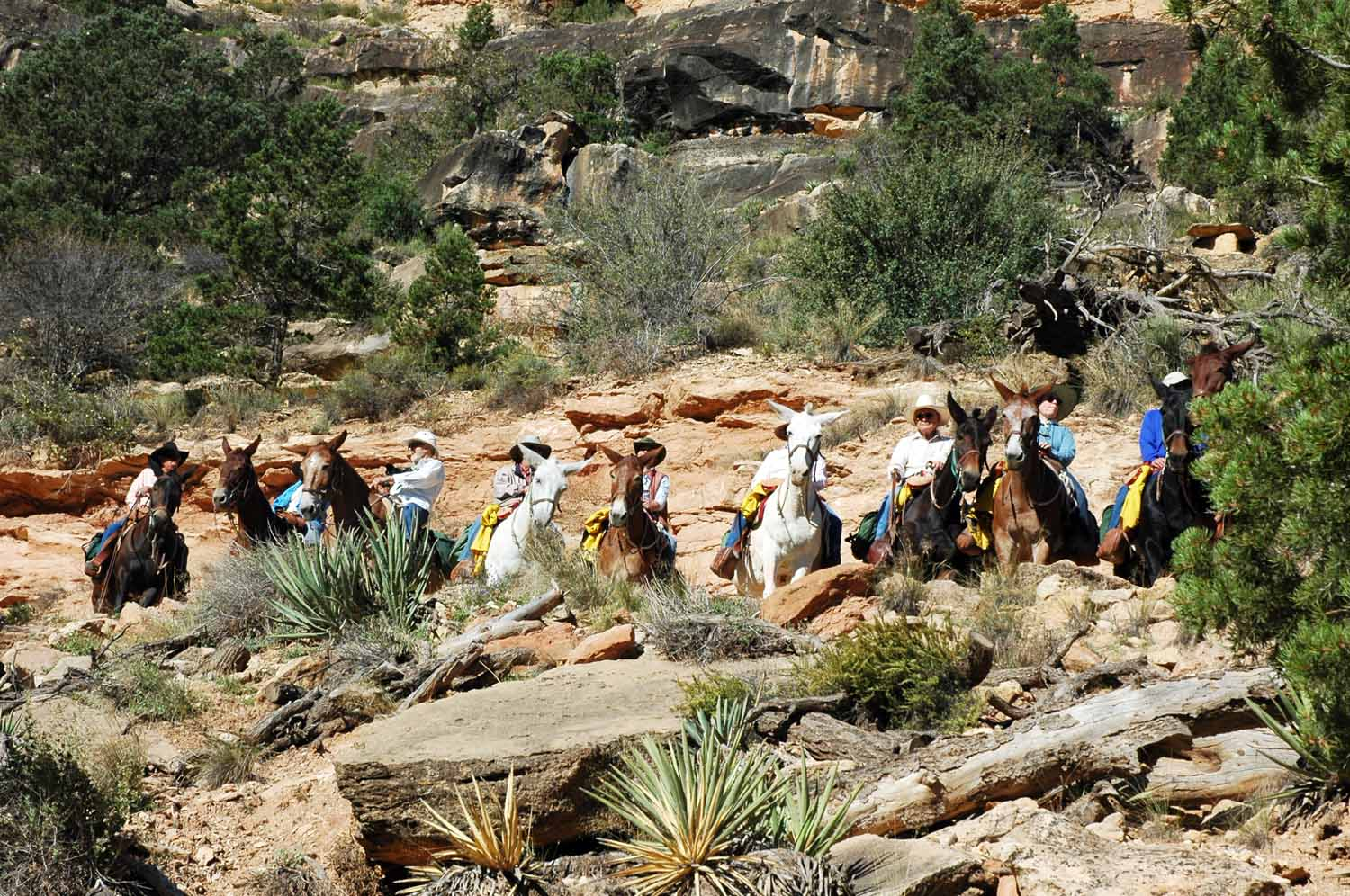 Bright Angel Trail is mule friendly