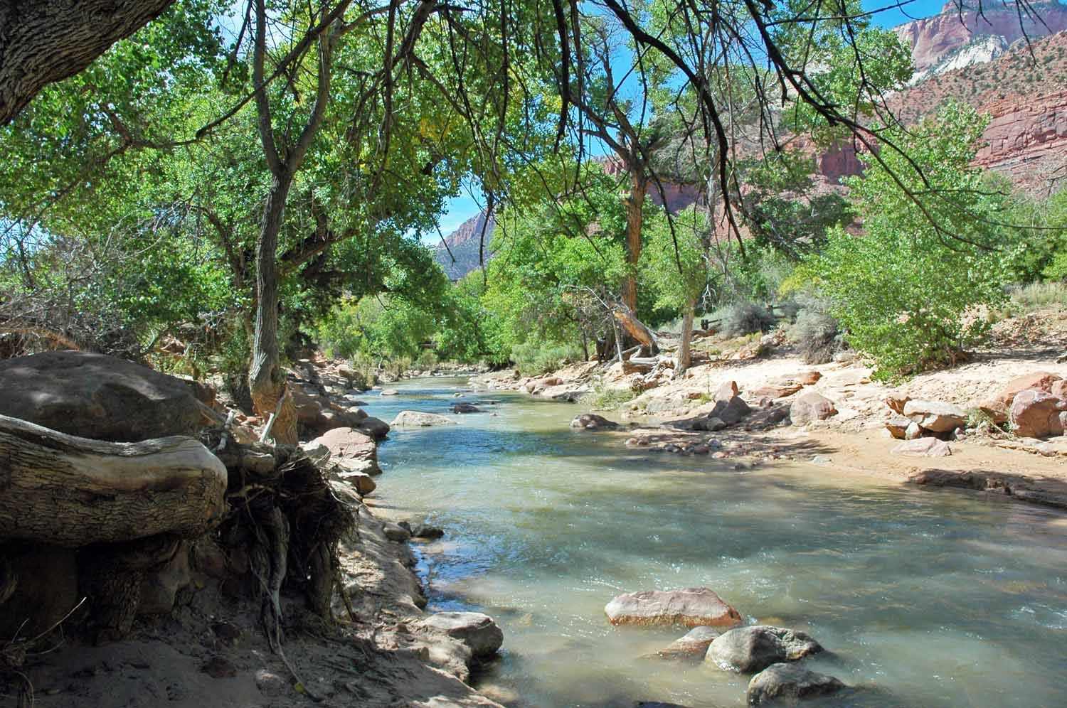 Watchman trail start and ends at the river...took off my shoes and soaked my feet in the cold water at the end...