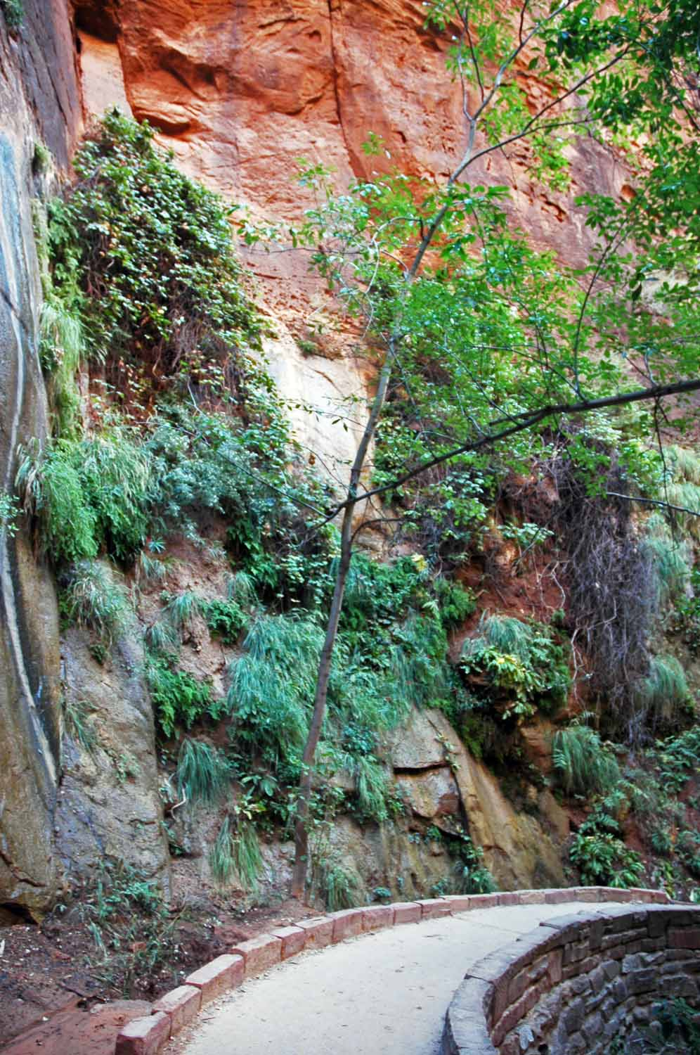 Narrows River Trail - hanging gardens
