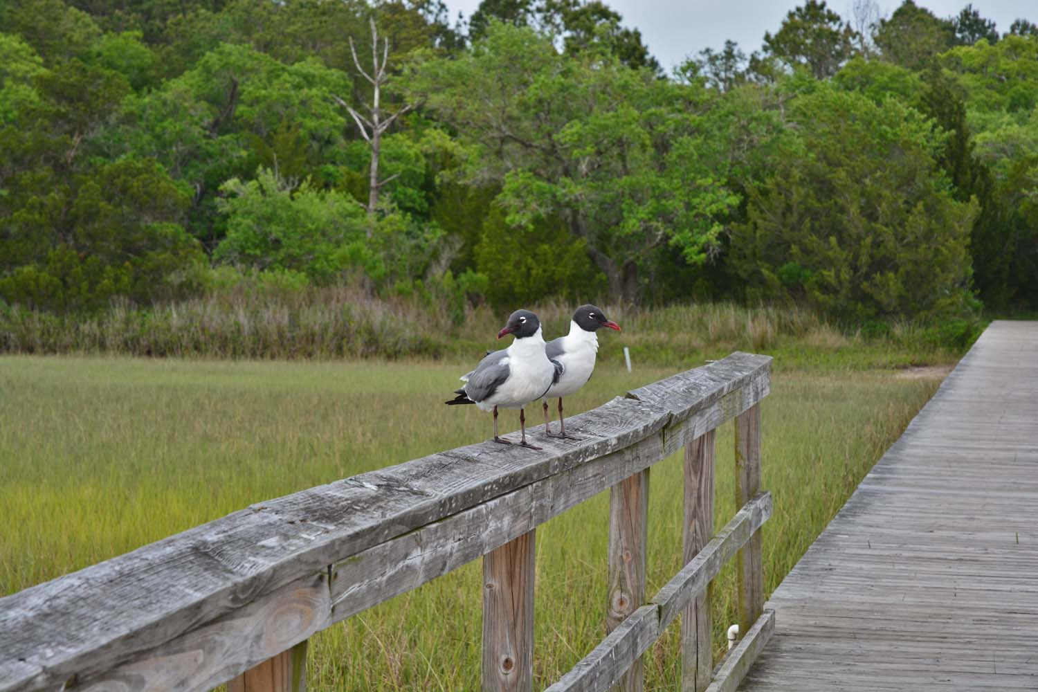 St James Island County Park residents