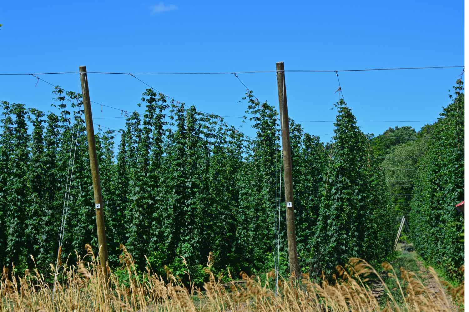 Hops Along The TART Trail