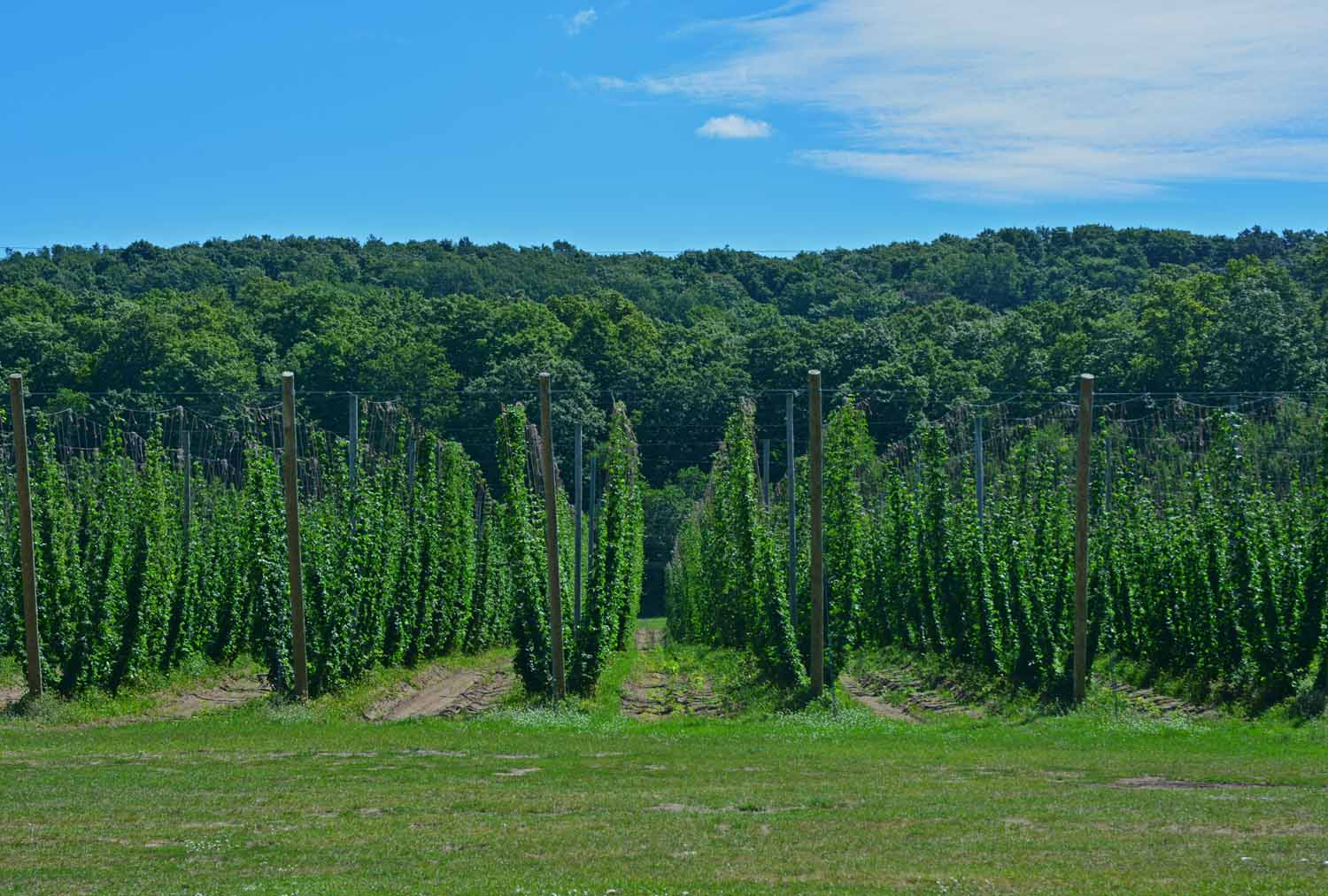Hops Farms - The Up And Coming Thing