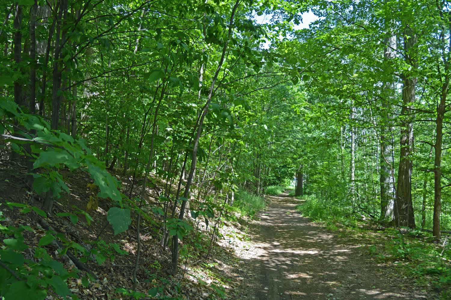 Extensive Trail System In The Woods At The Commons