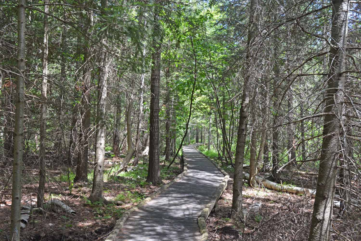 Many Improved Trails for Hiking And Cross Country Skiing