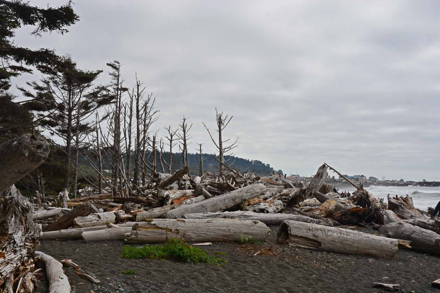 This is Rialto Beach on the ocean.  The setting was certainly unexpected.  The power of the water to bring all these logs ashore is impressive.  We found a great campground here and will certainly stay there next time we visit.