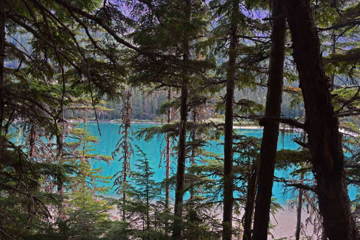 Avalanche Lake changes color when the sun shines.