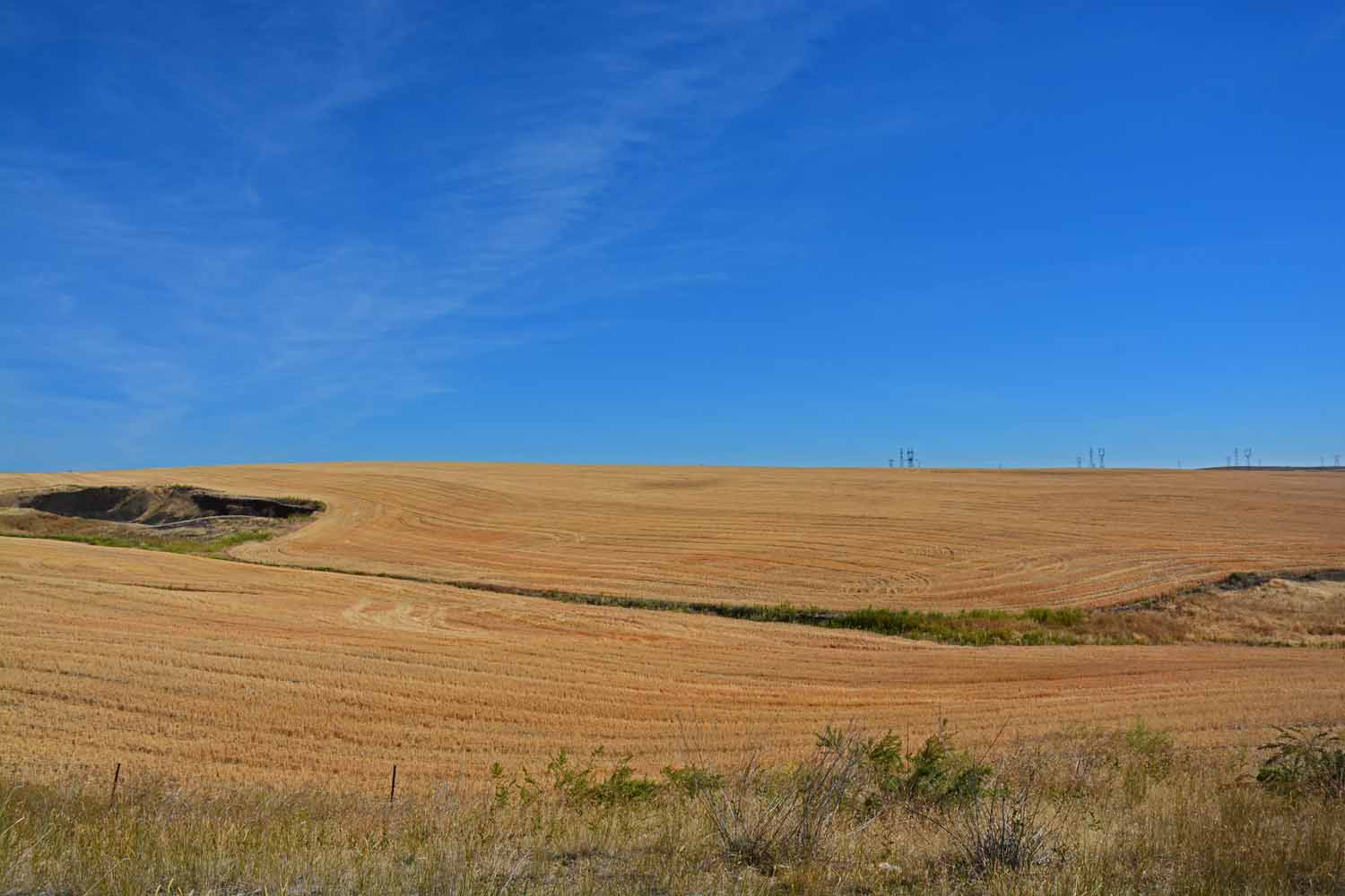 We did not expect to see so many wheat fields in Washington.  They went on for miles.