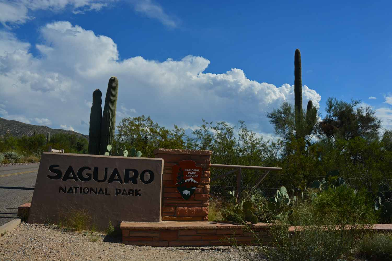 After checking out Phoenix and Tucs5don we take on Saguaro National Park...one more National Park checked off the list.