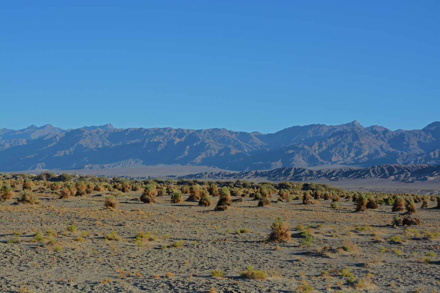 This is call the Devil's Corn field.  A desert plant that looks like it was planted.