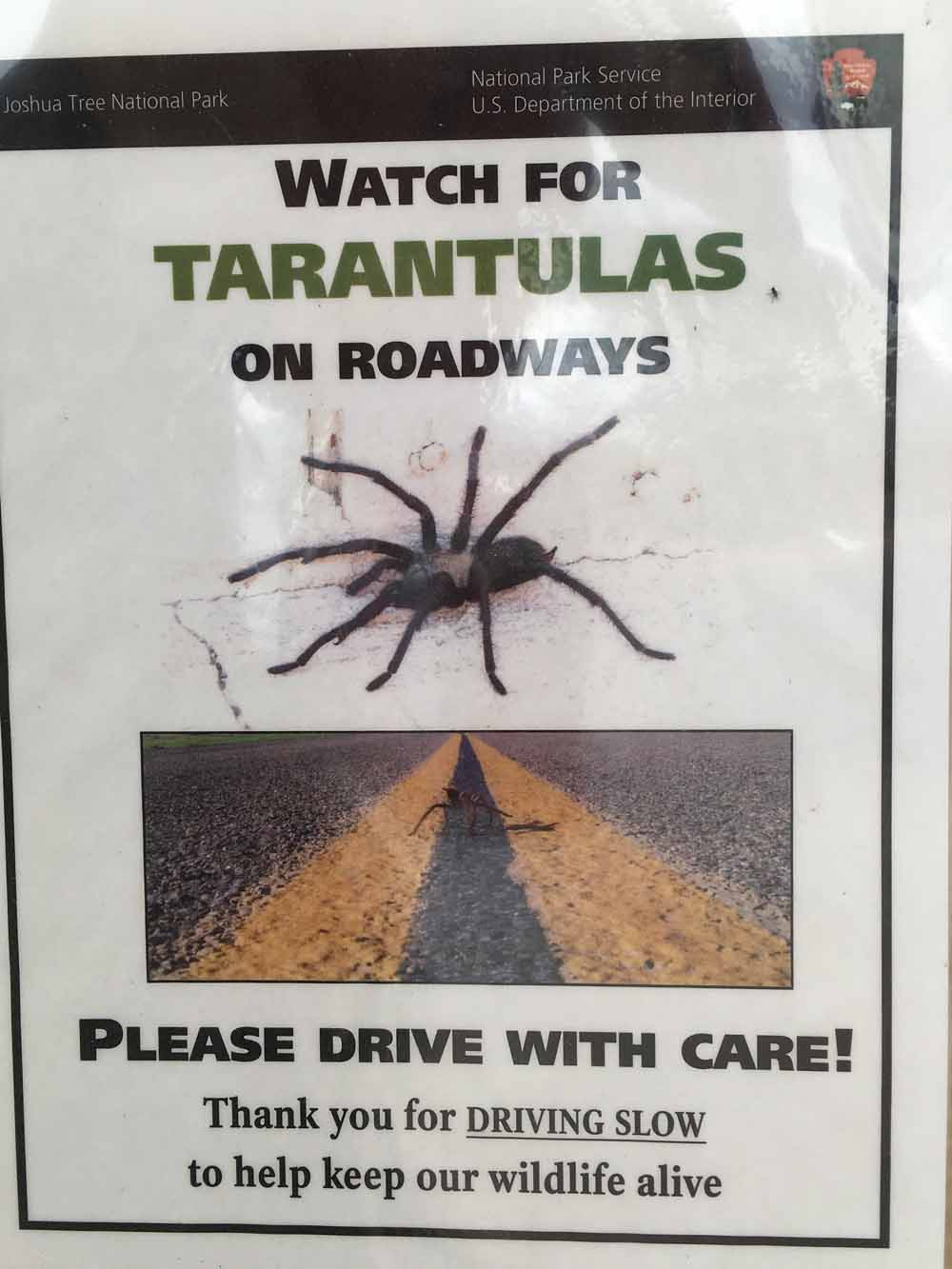 We found this notice scary.  At Kings Canyon and Death Valley  there are a lot of Tarantulas.  You see them on the road all the time.
