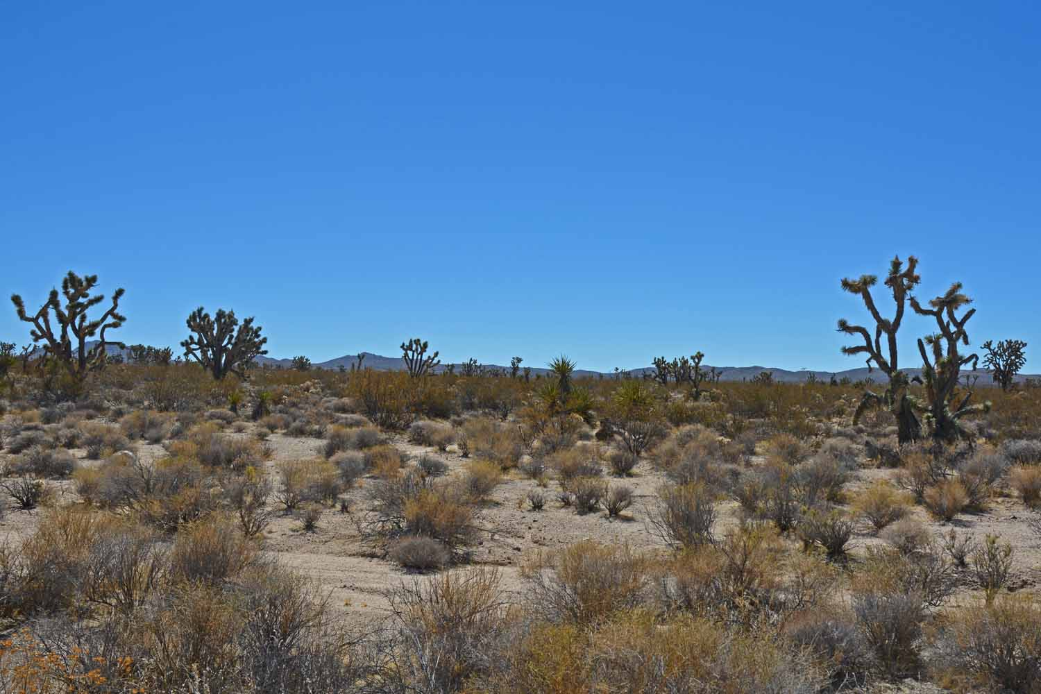 This picture is true Mojave Desert.