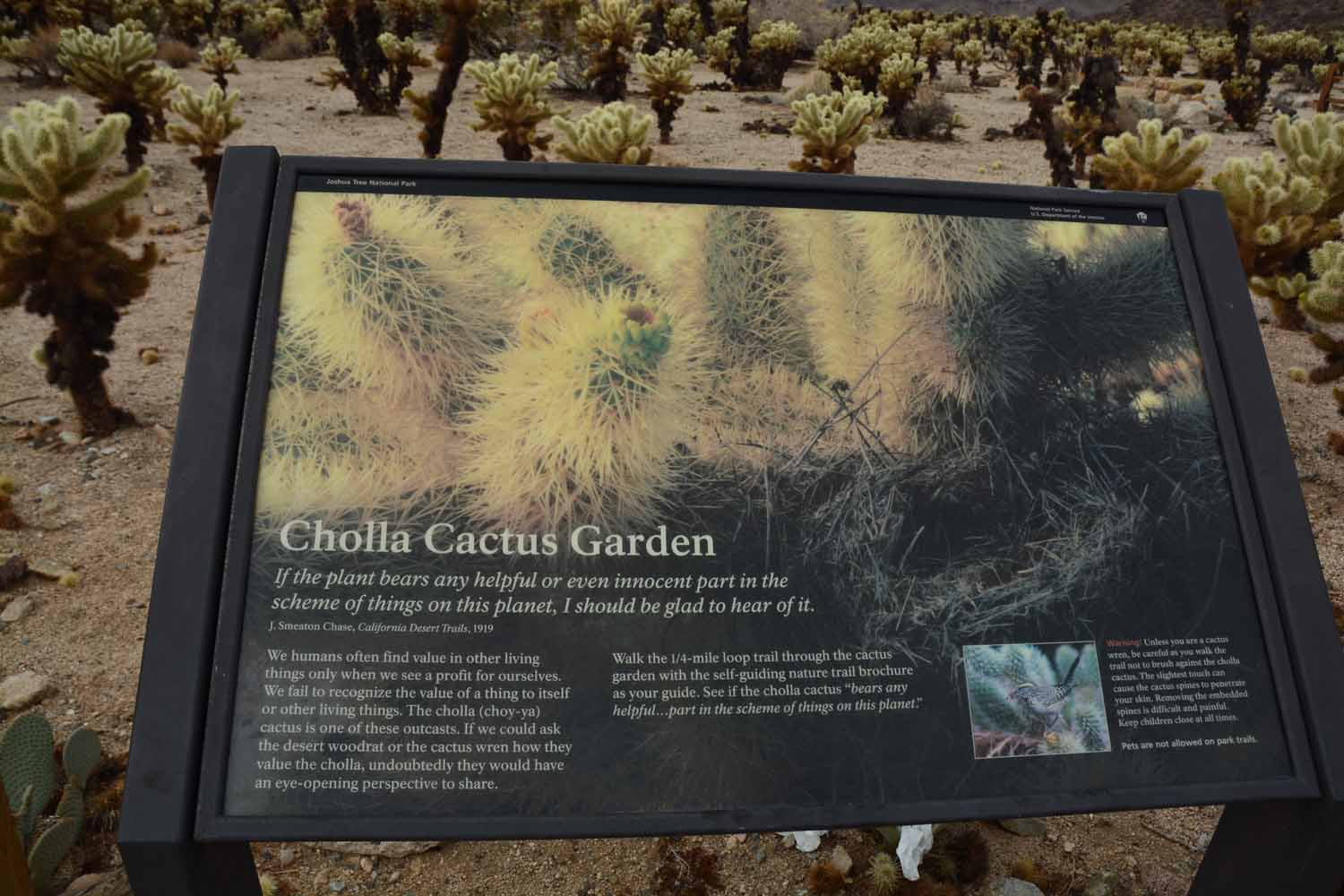 We made a stop at the Cholla Cactus Garden.  These are called jumping cactus and have a bad reputation.