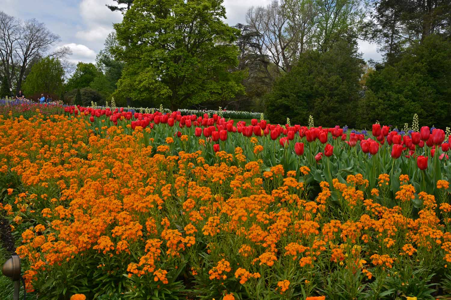 Longwood spring display...a very favorite stop when we are in Pennsylvania