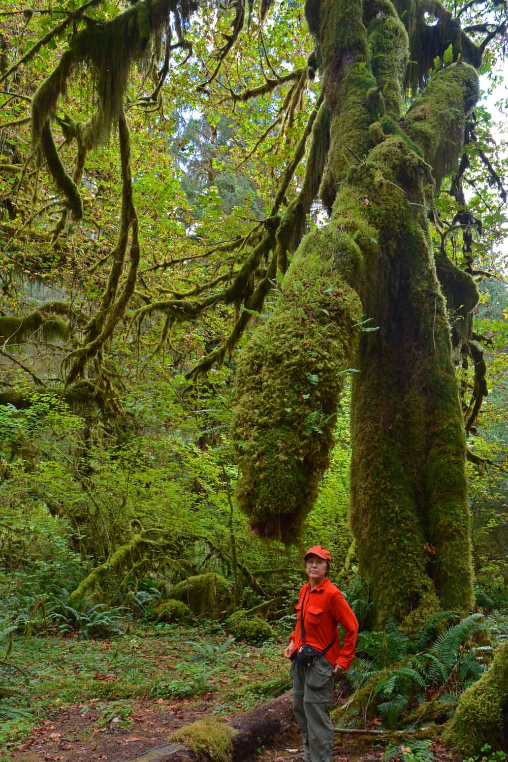Jan enjoyed the many hikes in the Rain Forest of Washington