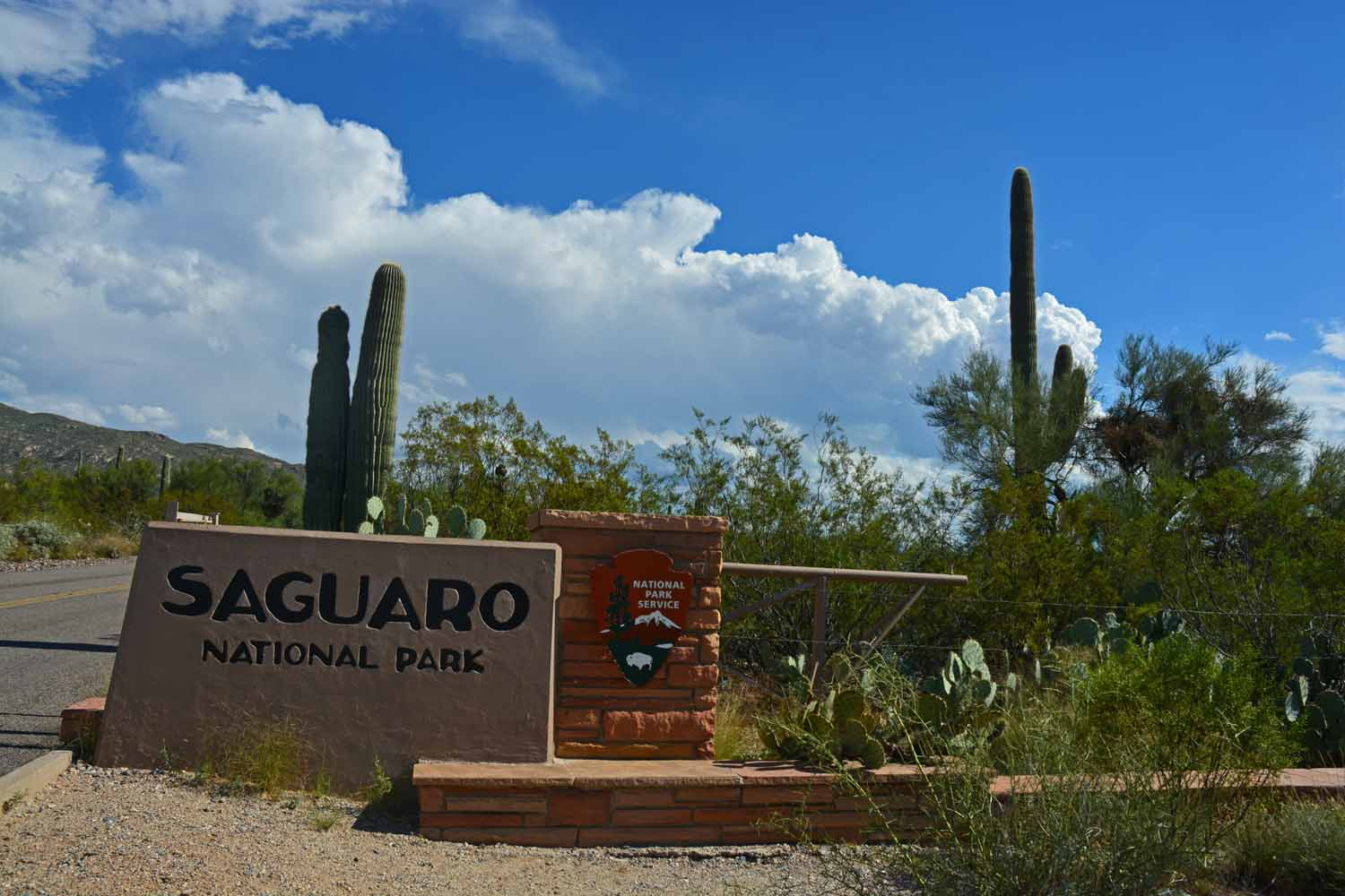 Saguaro National Park at San Antonio is a great place to learn about cactus...