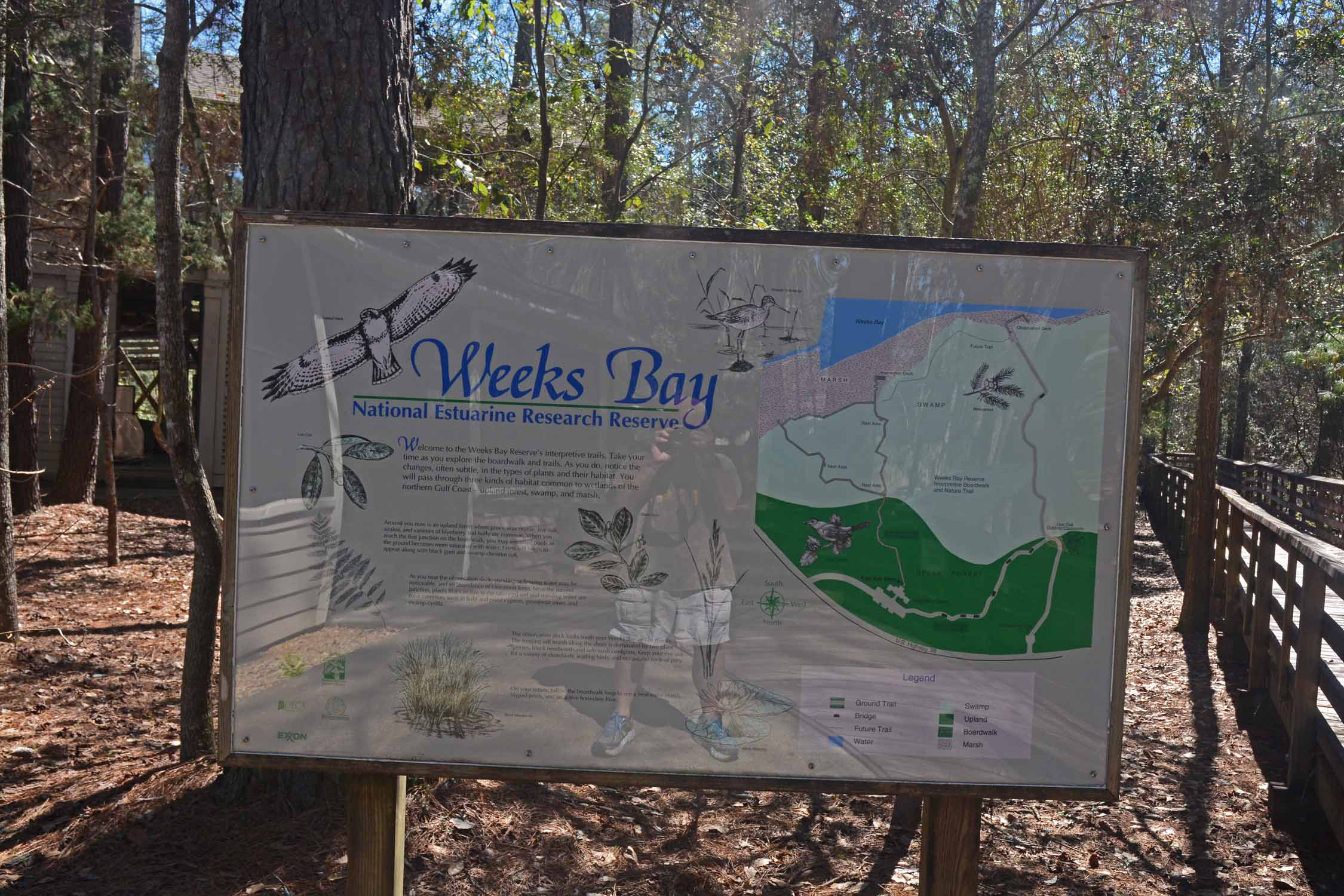 Weeks Bay is an interest stop between Gulf Shores and Fairhope.  Educational setting for the study of estuarine ecosystem where salt water and fresh water meet